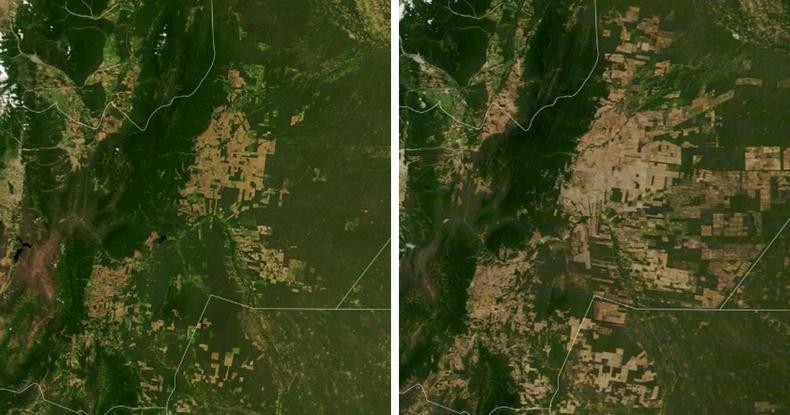Өмнөд Америкийн Гран Чако мужийн ойгүйжилт