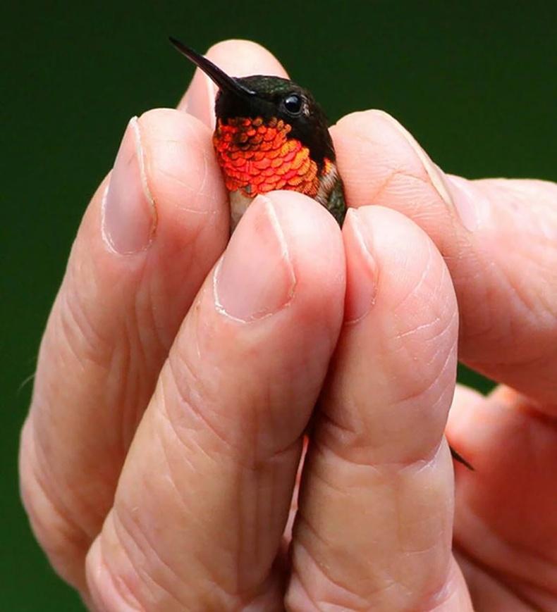 Хуруунаас жижигхэн шувуу