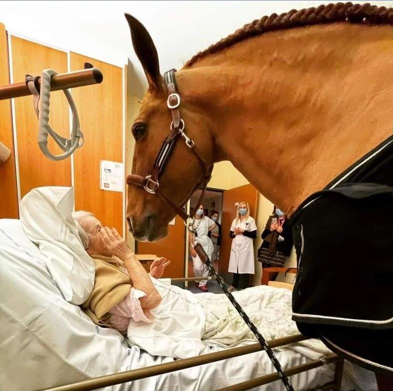 """Хүнд өвчтөнүүдэд хань болж, тайвшруулдаг морь энэхүү эмнэлэгт """"ажилладаг"""""""