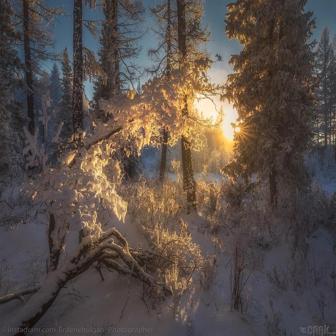 Өвлийн ойд...