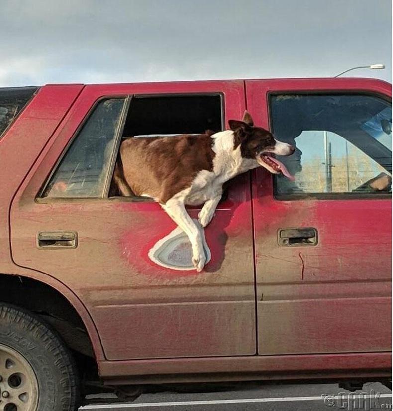 Машины энэ хэсэгт нохой хамгийн их дуртай