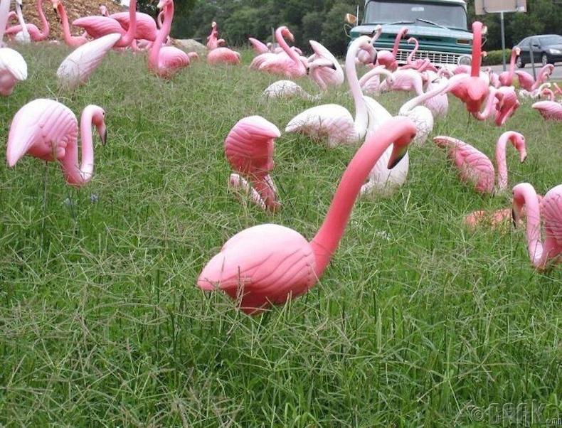 Энэ дэлхий дээрх амьд фламингоноос хуванцар фламингонууд илүү их байдаг