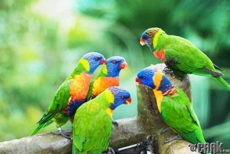 Амьтад ялгаагүй өөр хэлээр ярьдаг бол уу?