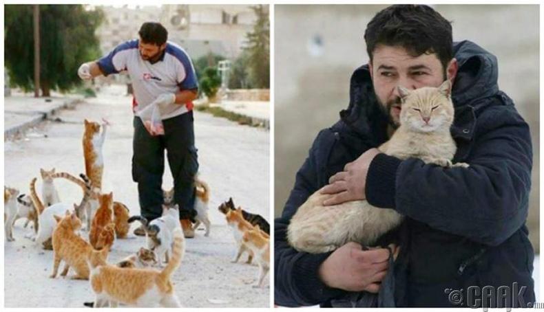 Хаягдсан муурнуудыг авч тэжээсэн залуу