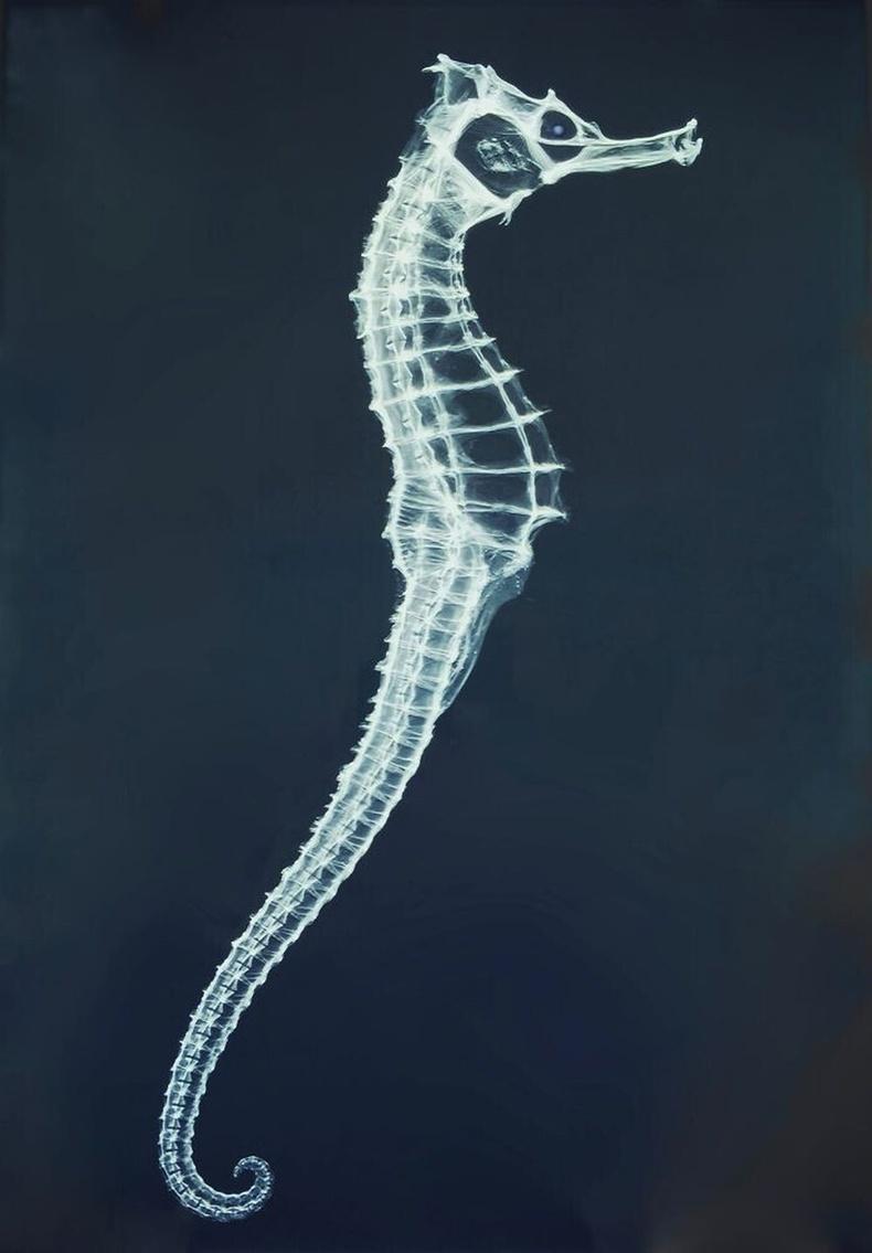 Далайн морины рентген