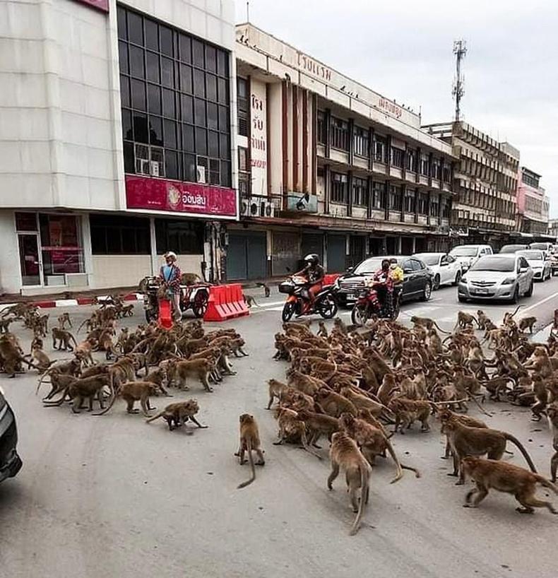 Тайландын хотын гудамжинд дайсагнагч хоёр омгийн сармагчингууд бүх замын хөдөлгөөнийг зогсоож байгаад тулалджээ