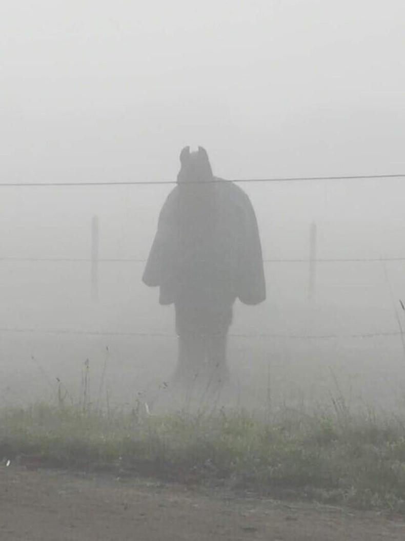 Бэтмэн биш хөнжил нөмрүүлсэн морь