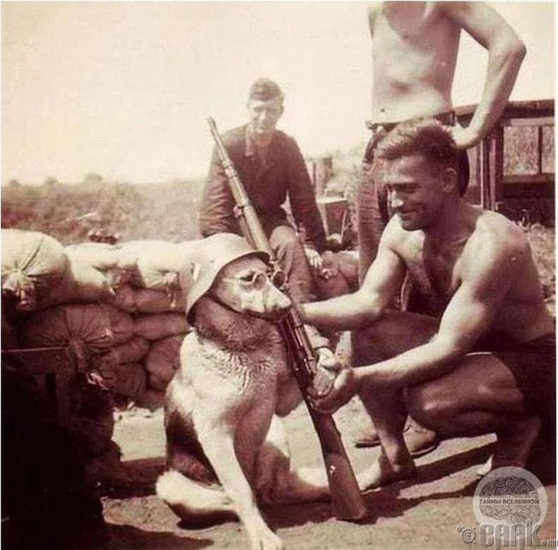Герман цэргүүд нохойн хамт - 1940 он