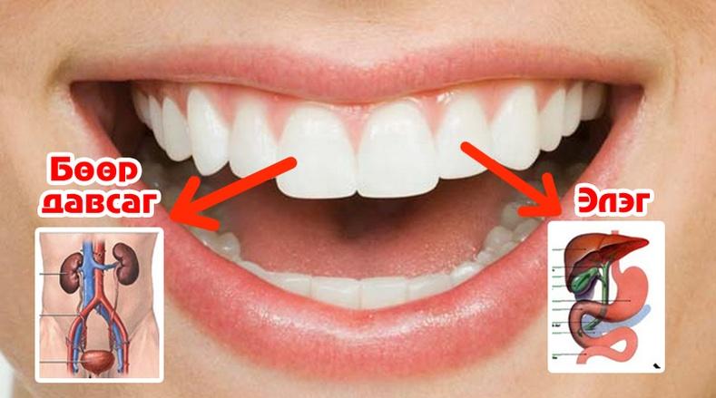 Шүд ямар эрхтэнтэй холбоотой байдаг вэ?