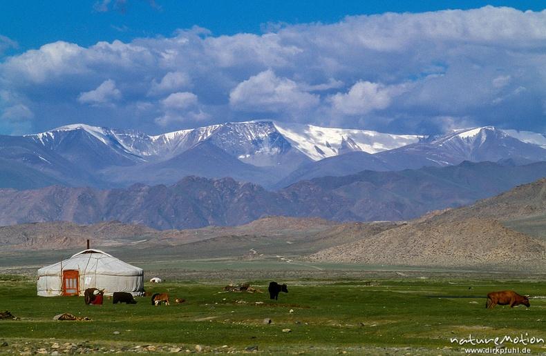 Алтайн сүрлэг уулс, Ховд аймаг
