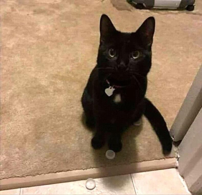 """""""Бөглөөгөөр тоглох дуртай муур маань намайг угаалгын өрөөнд уйлж байхыг сонсоод тоглоомоо хаалганы доогуур түлхээд байсан..."""""""