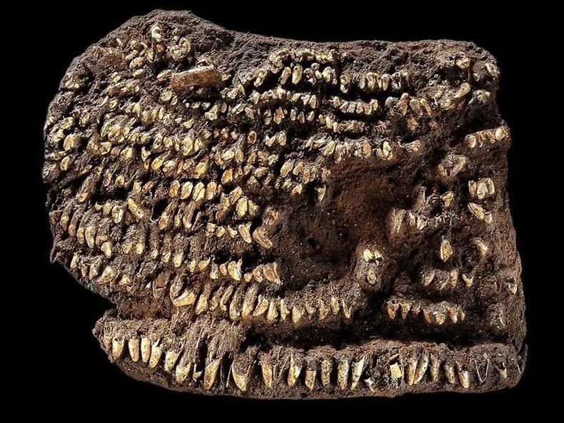 Хамгийн эртний түрийвч (4500 жилийн настай)