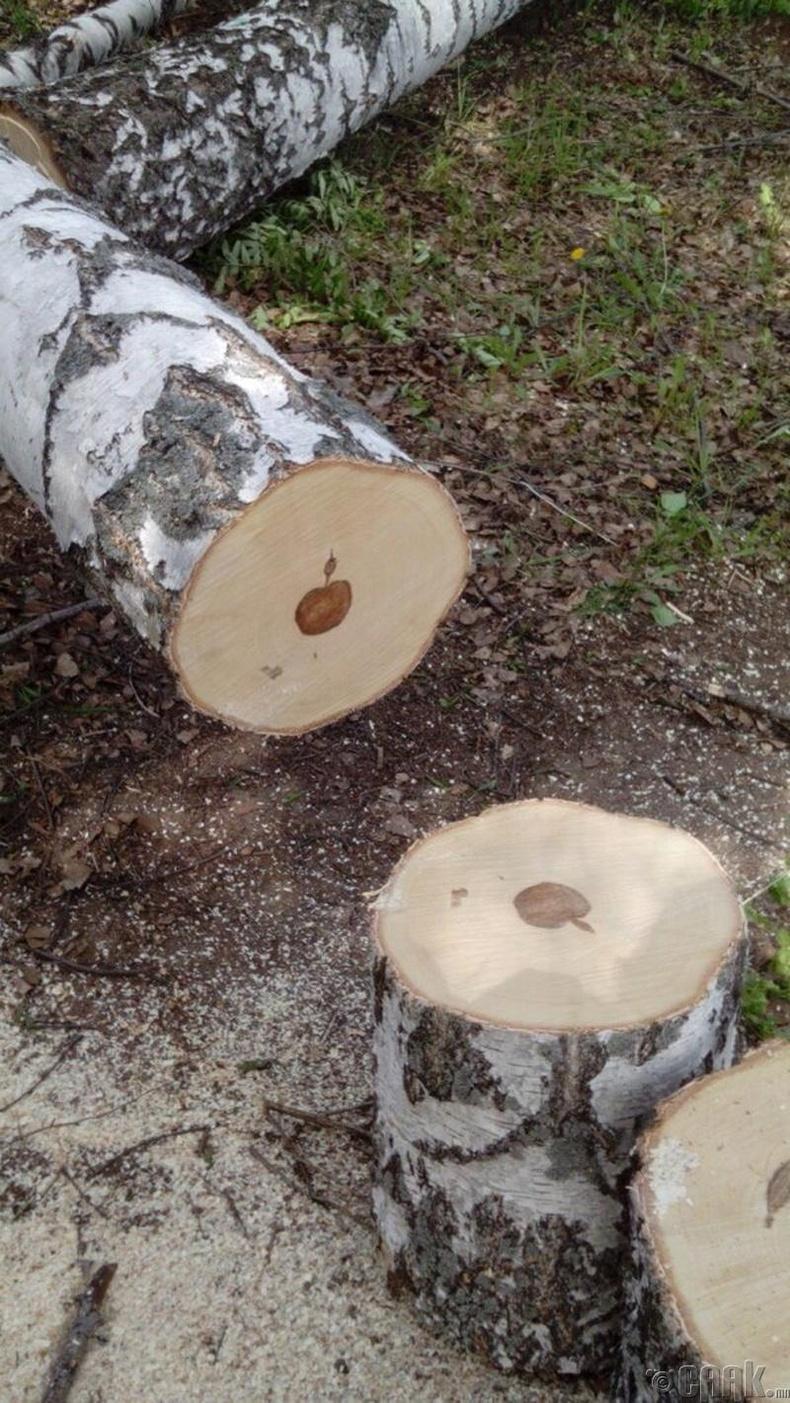 Хус модны доторх алимны дүрс