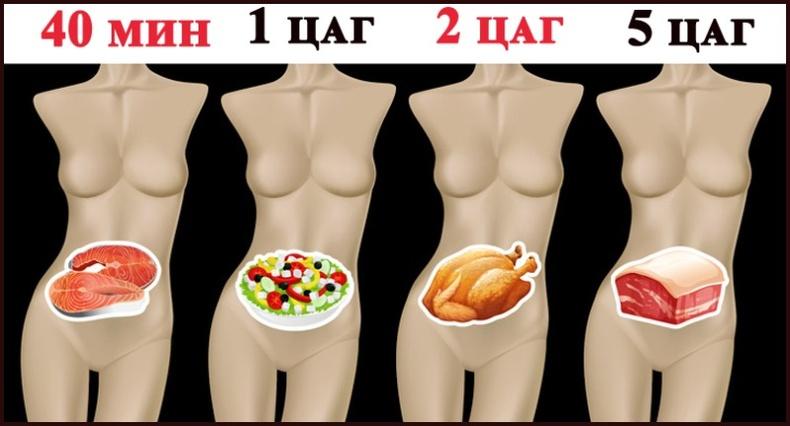 Эдгээр хоол хүнс ходоодонд хэр удаан боловсордгийг та мэдэх үү?
