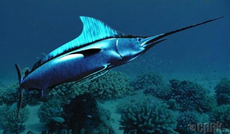 Илдэт загасны хошуу
