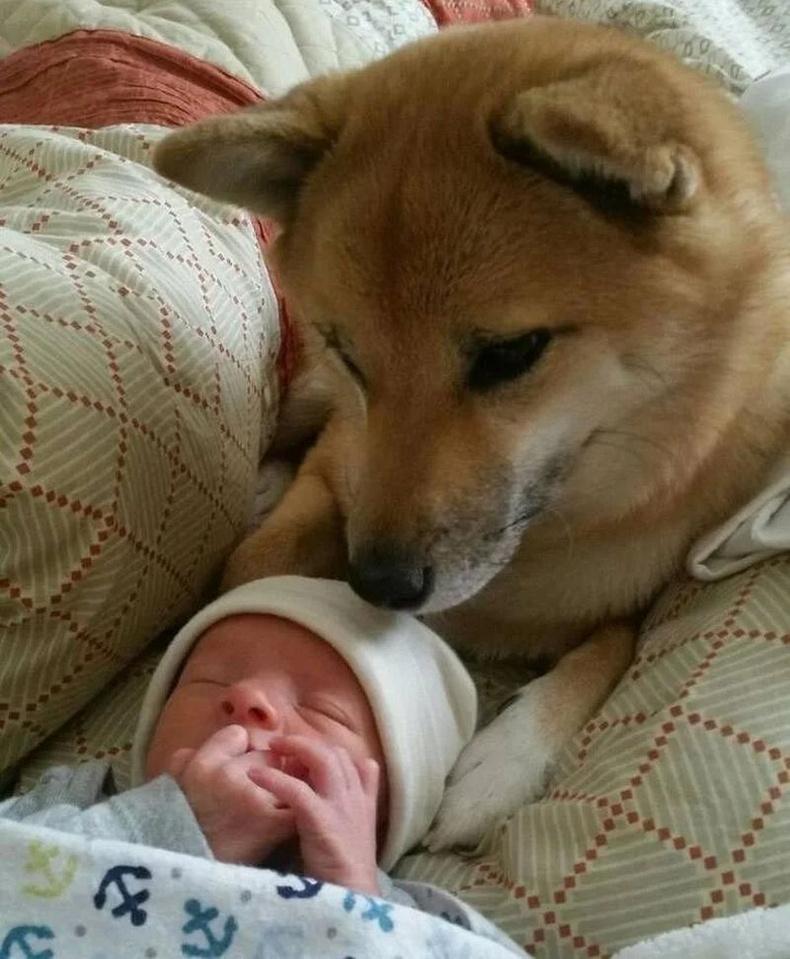 """""""Манай нохой бяцхан эзэндээ маш их хайртай. Тэр түүнийг хэзээ ч орхихгүй, басбайнга хамгаалдаг""""."""