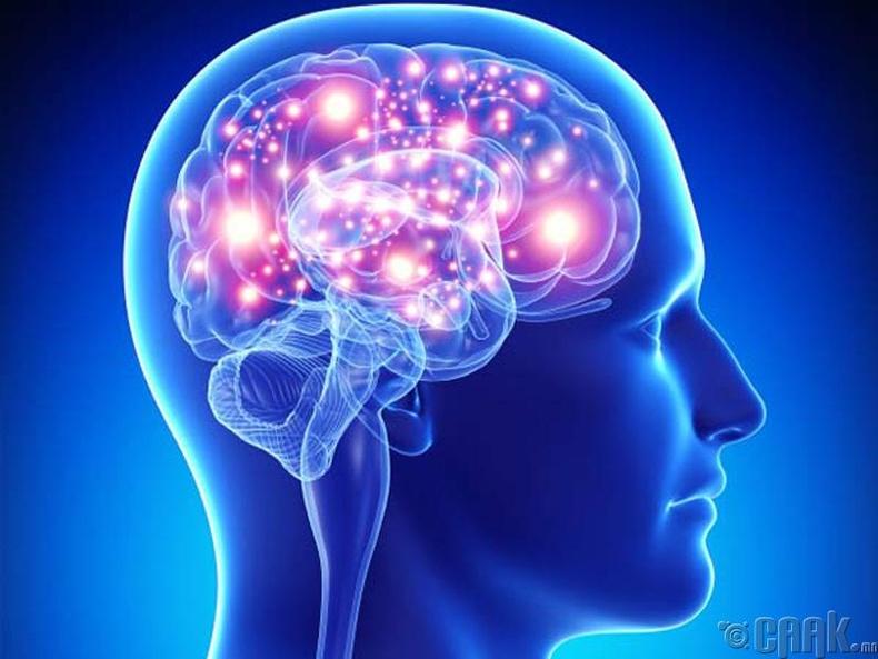 Тархийг хамгаална