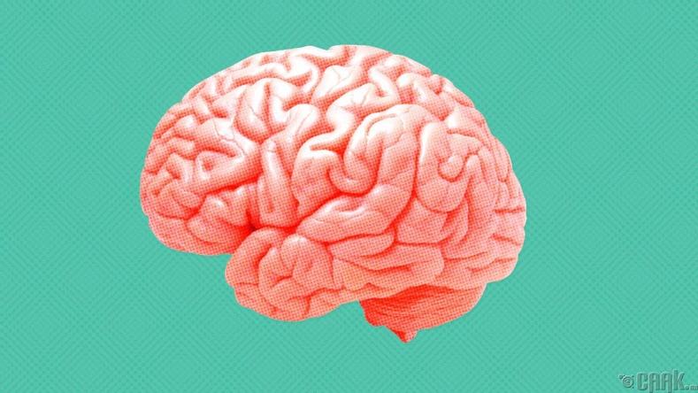 2600 жилийн настай тархи Англиас олджээ