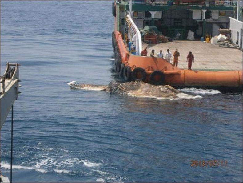 Персийн буланд далайчид хачин амьтан олжээ