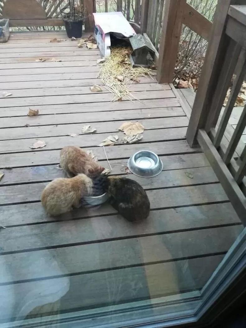 """""""Мууранд дургүй гэж хэлдэг 80 настай аав маань эзэнгүй муурнуудыг хооллох гэж идүүр, муурны хоол авчирчээ."""""""
