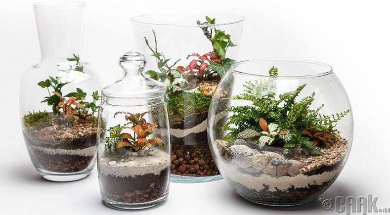 Цэцгийн аквариум