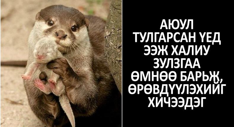"""""""Та мэдэх үү?"""" - Амьтны ертөнцийн сонирхолтой бяцхан баримтууд"""