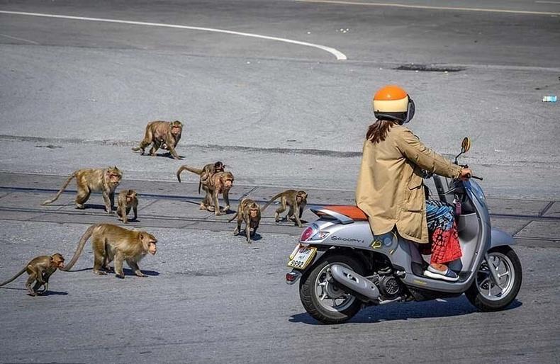Тайландчууд сармагчинд эзлэгдсэн хотоо эргүүлэн авахаар тэмцэж байна