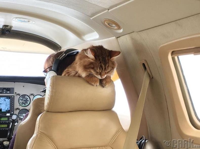 Энэ бол Дэсмонд муур! Ямар гайхалтай зөөлөн дэр болсныг нь хар даа!