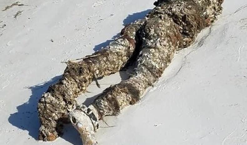 """Америк охин далайн эрэг дээрээс """"толгойгүй цогцос"""" олоод цагдаа дуудтал..."""