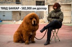 Дэлхий дээрх хамгийн үнэтэй 10 амьтан