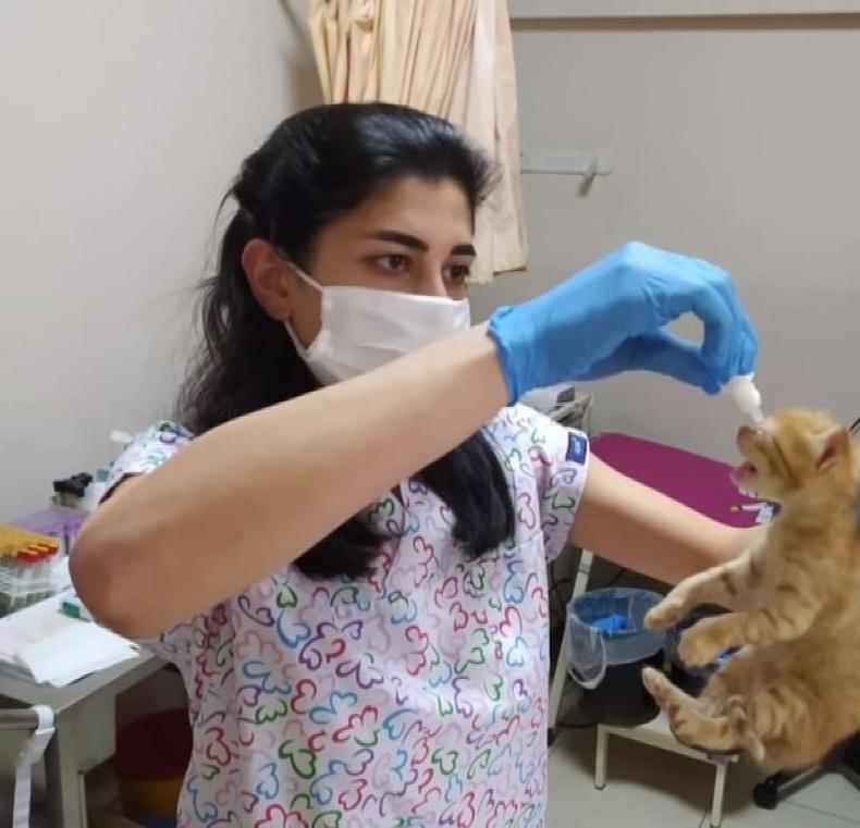 Муур ээжийн зорьж ирсэн эмнэлэг амьтны эмнэлэг байгаагүй ч эмч нар нь мэргэшсэн малын эмчээс зөвлөгөө авч, нүдэнд нь эм дусаасан байна.