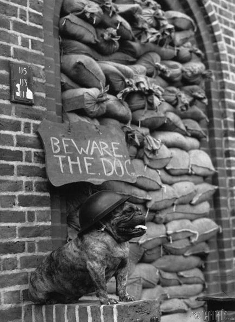 Лондон хот дахь зэвсэгийн агуулахын манаач нохой, 1940 он