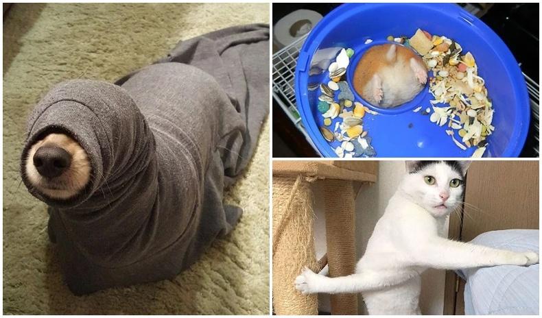 Хөөрхийлэлтэй байдалд гацсан амьтдын өхөөрдөм зургууд