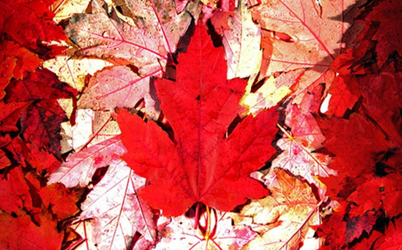 Канад
