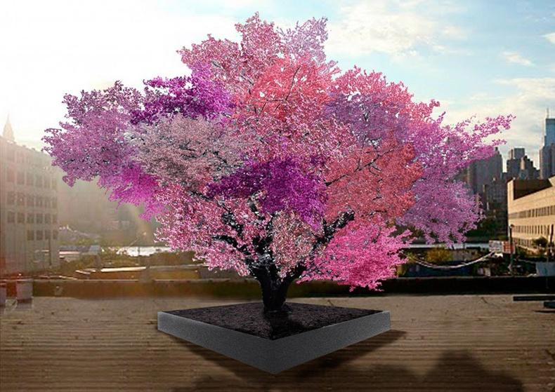 40 төрлийн жимс ургуулдаг мод
