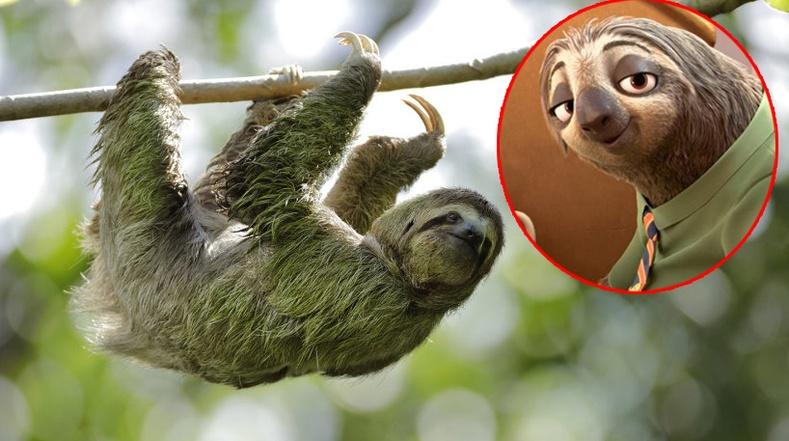 Ухаан муутай, удаан хөдөлгөөнтэйн ачаар аюулаас мултарч чаддаг амьтан