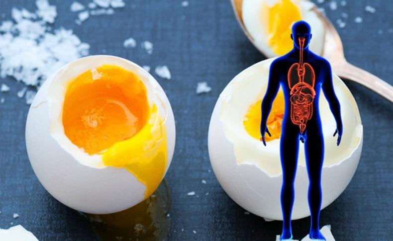 Өдөр бүр өндөг идвэл нэг сарын дараа бидний биед юу болох вэ?