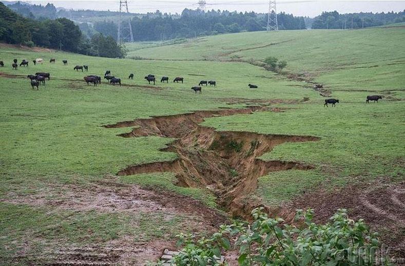 Газар хөдлөлтөөс болж тус цахилгаан станц сүйдсэн юм. Фермер Масами Уошизавагийн сүрэг энэ нутагт бэлчиж эхэлжээ