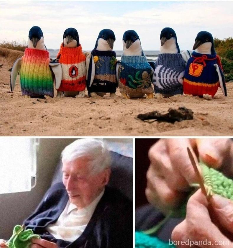 Бяцхан оцон шувуудад хувцас нэхэж илгээдэг Австрали өвөө