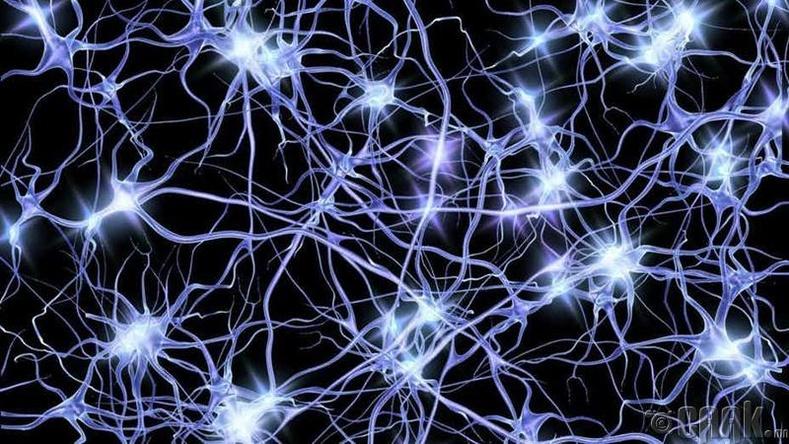 Хүний тархи олон мэдрэлийн эстэй холбогдсон байдаг