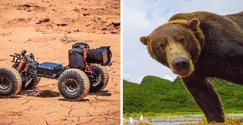 Хөдөлгөөнт камерын дуранд буусан амьтдын хөгжилтэй төрх