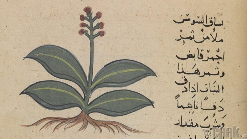 Араб хэл