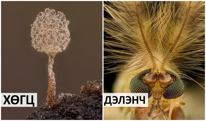 """""""Бичил ертөнцийн нууц"""" - Микроскопоор буулгасан 2021 оны шилдэг гэрэл зургууд"""