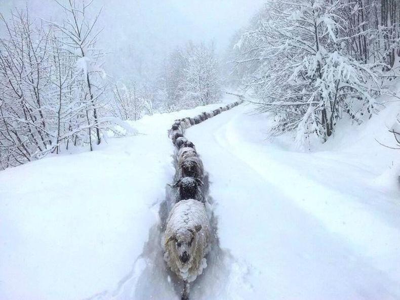Цувж явж буй хонин сүргийг тэр болгон хараад байхгүй