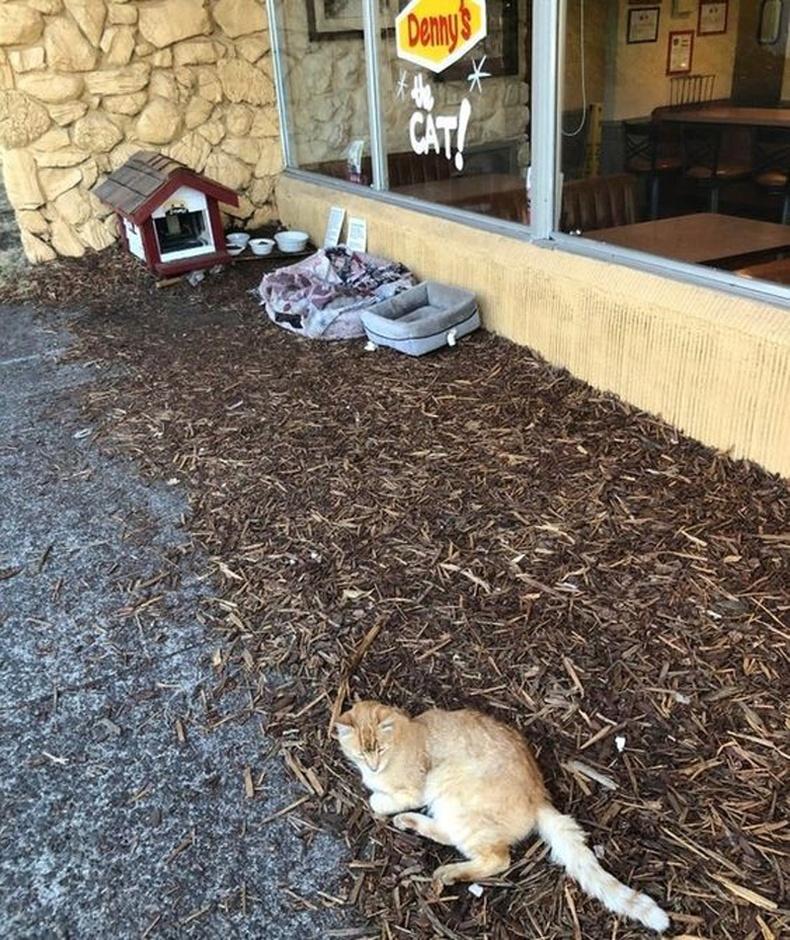 Энэ цайны газрын эзэн зэрлэг муурнуудад зориулсан газар барьжээ