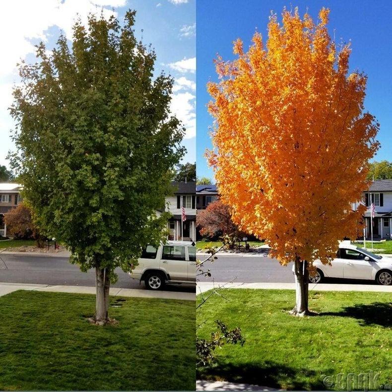 Агч мод 11 хоногийн дотор ингэж өөрчлөгджээ