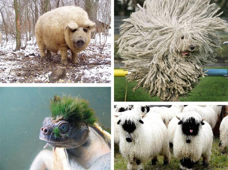 Бидний харж байгаагүй үслэг амьтад