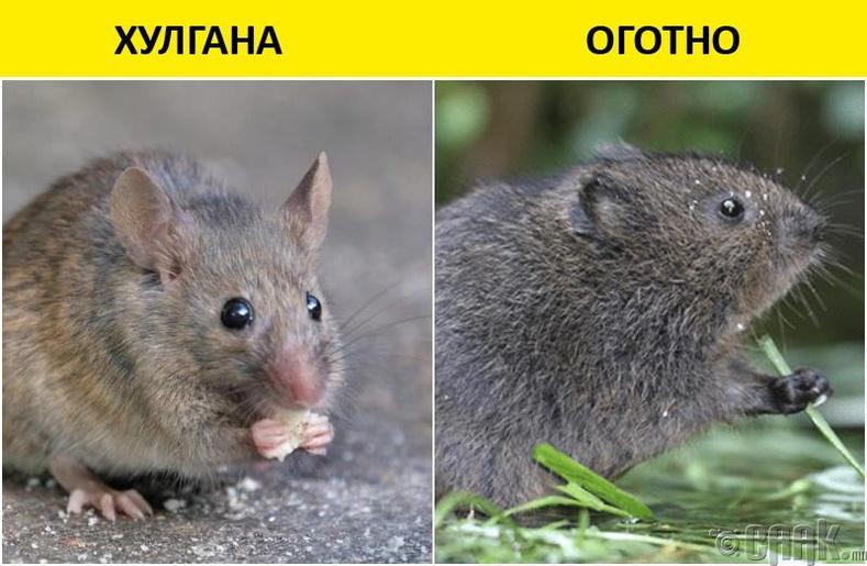 Оготно ба хулгана