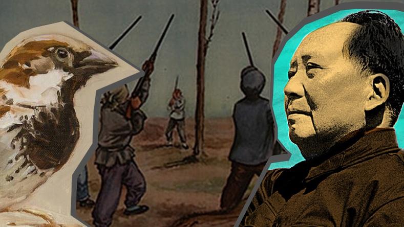 """""""Бор шувууны дайн"""" Хятадыг сүйрүүлэх дөхсөн түүх"""