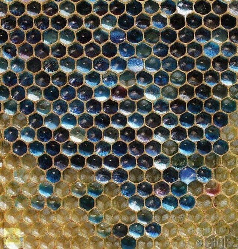 Франц зөгийнүүдийн үйлдвэрлэсэн ногоон, цэнхэр өнгийн зөгийн бал